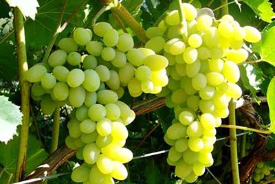 Во время ремиссии стоит ограничиться употреблением нескольких ягод