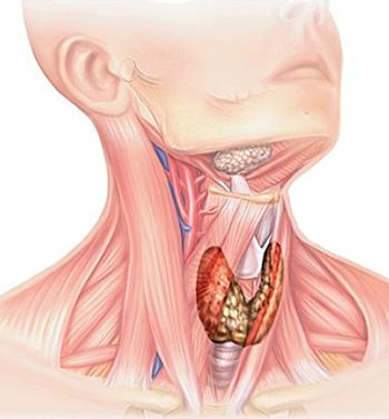 Как проверить щитовидку в домашних условиях самостоятельно с 86