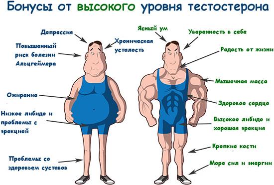 Как повысить тестостерон у мужчин народными средствами: рецепты и ...