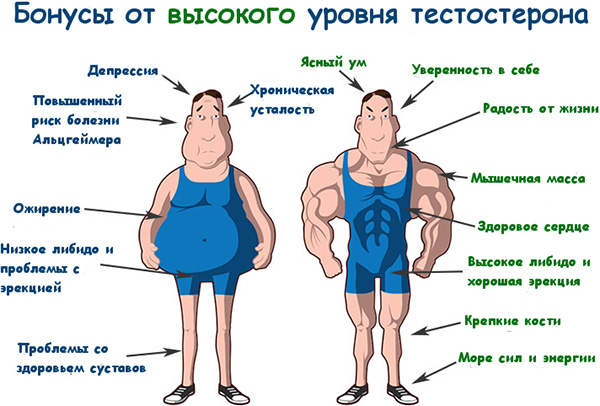 Продукты, повышающие тестостерон у мужчин: список продуктов для ...