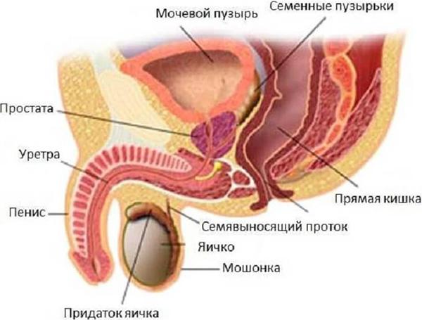 Рак яичка у мужчин: симптомы, лечение, прогноз выживаемости